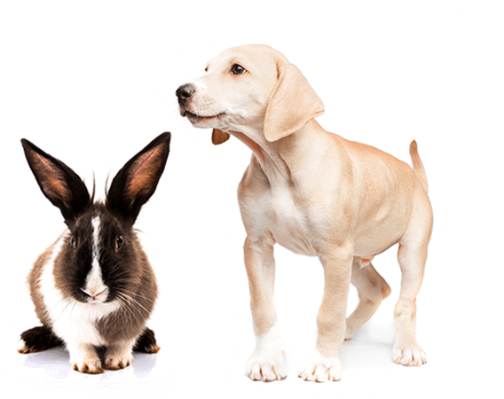 Rabbit and Dog